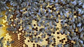 Abstract hexagon structure is honeycomb from bee hive filled with golden honey. stock footage