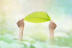 Abstract, holding a green leaf on the pastel and vibrant nature Royalty Free Stock Photo