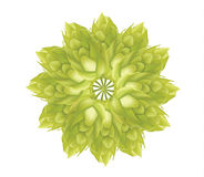 Abstract Hop flower plant 3d vector icon isolated on white background. Hops beer vector illustration. Stock Photo
