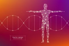 Abstract human body with molecules DNA. Medicine, science and technology concept. Vector illustration Stock Image