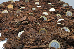 Abstract idee van het kweken van geld Stock Foto