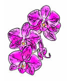 Abstract illustration of orchid flowers Stock Photography