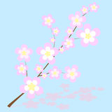 Abstract illustration of sakura cherry blossoms Royalty Free Stock Images