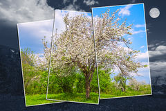 Abstract image of the apple tree. Stock Image
