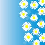 Abstract White Daisies in Blue Background vector illustration