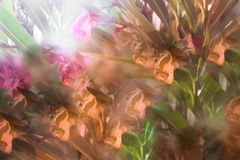 Abstract image of flowers in the park vector illustration