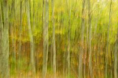 Abstract Image of a Forest Stock Photo