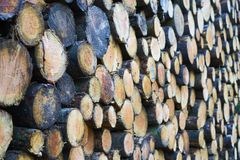 Close up of a stack of freshly felled tree trunks with shallow d royalty free stock images