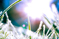 Abstract image of frosty grass blades with the sun behind Royalty Free Stock Images