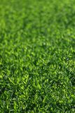 Abstract image of green grass under bright sunlight. Selective focus, film effect and author processing.  stock image