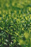Abstract image of green grass under bright sunlight. Selective focus, film effect and author processing.  stock photos