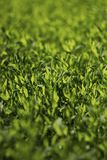 Abstract image of green grass under bright sunlight. Selective focus, film effect and author processing.  royalty free stock photo