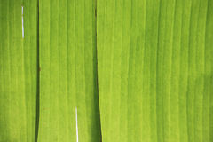 Abstract image of green palm leaf for background Royalty Free Stock Photos
