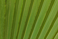 Abstract image of green palm leaf. Stock Photography