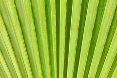 Abstract image of green palm leaf. Stock Photo