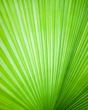 Abstract image of leaves Stock Images