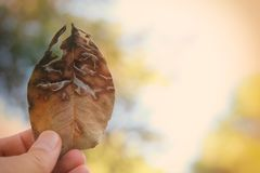 Abstract image of man& x27;s hand holding dry and cracked dry leaf against bokeh background. stock photos