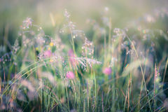 Abstract image of meadow Royalty Free Stock Photography
