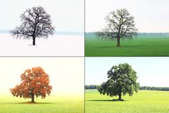 Abstract Image Of Lonely Tree In Winter Without Leaves On Snow, In Spring Without Leaves On Grass, In Summer On Grass With Green F Royalty Free Stock Image