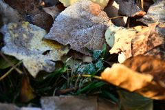 Old Decaying Leaves. An abstract image of old decaying leaves covered in early morning frost stock photography