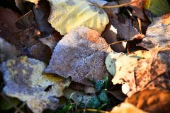 Old Decaying Leaves. An abstract image of old decaying leaves covered in early morning frost royalty free stock photo
