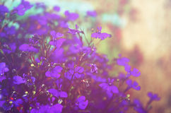 Abstract image of Pink and purple flowers bloom, with glitter overlay.  Stock Image