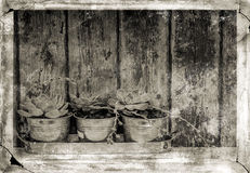 Abstract image of plants with a grunge effect. Stock Image