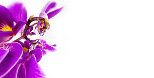 Abstract image of rooster by orchid flower with a copy space Floristic colorful background Stock Photos