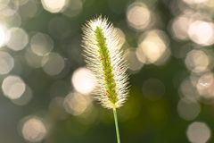 Abstract , impreesions of Gramma grass Royalty Free Stock Images