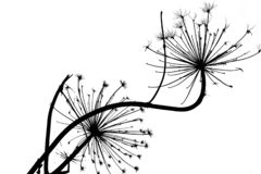 Abstract inc silhouette of cow parsnip plant. Abstract black illustration on white background stock photo