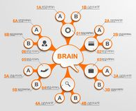 Abstract infographic as metabolic forms in the center of the brain. Design elements. Stock Photos