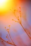 Abstract Installatiesilhouet bij zonsondergang Royalty-vrije Stock Afbeelding