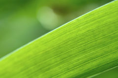 Abstract iris leaf background Stock Photography
