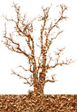 Abstract isolates of sawdust in the dry tree. Stock Photography