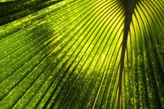 Abstract Jungle Background Royalty Free Stock Photo