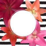 Abstract Kader met Lily Flower Natuurlijke achtergrond Vector illustratie Stock Afbeelding