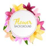 Abstract Kader met Lily Flower Natuurlijke achtergrond Vectorillu Royalty-vrije Stock Foto's