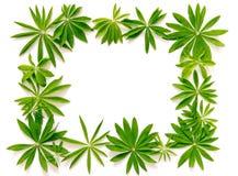 Abstract kader van verse groene bladeren op wit Royalty-vrije Stock Afbeelding