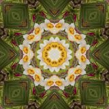 Abstract kaleidoscope with daffodil flowers at springtime stock photography