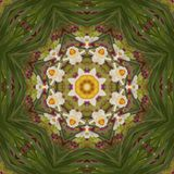 Abstract kaleidoscope with daffodil flowers at springtime royalty free stock image