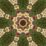 Abstract kaleidoscope with daffodil flowers at springtime stock photo