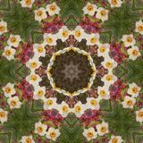 Abstract kaleidoscope with daffodil flowers at springtime stock images