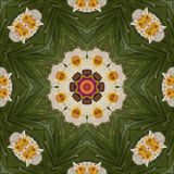 Abstract kaleidoscope with daffodil flowers at springtime royalty free stock photos