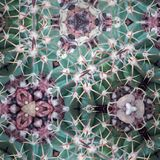 Abstract kaleidoscopic texture Stock Photography