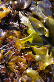Abstract, kelp leaves Stock Photo