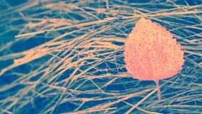 Abstract kleurrijk blad op de droge achtergrond van de graslente Stock Afbeeldingen