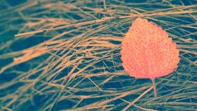 Abstract kleurrijk blad op droge de aardachtergrond van de graslente Royalty-vrije Stock Afbeelding