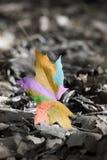Abstract kleurrijk de herfstblad. Stock Afbeeldingen