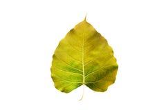 Abstract kleurrijk geel die blad, op witte achtergrond wordt geïsoleerd Royalty-vrije Stock Foto