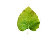 Abstract kleurrijk groen die blad, op witte achtergrond wordt geïsoleerd Royalty-vrije Stock Fotografie